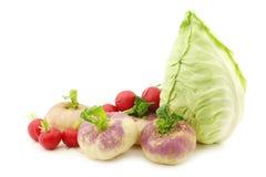 Mix of cabbage,radishes and turnips Stock Image