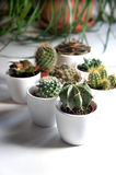 Mix of cactuses and other plants in the white pots. Mix of cactuses and other plants on the white table Stock Photos