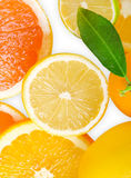 Mix of citrus slice Royalty Free Stock Photography