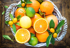 oranges,limes, kumquats,grapefruits,lemon, mandari Royalty Free Stock Photo