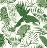 Mix palm leaf tree background Stock Images