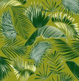 Mix palm leaf tree background Stock Image