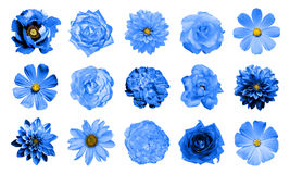 Mix collage of natural and surreal blue flowers 15 in 1: dahlias, primulas, perennial aster, daisy flower, roses, peony isolated. On white royalty free stock photos
