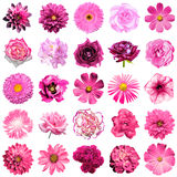 Mix collage of natural and surreal pink flowers 25 in 1. Peony, dahlia, primula, aster, daisy, rose, gerbera, clove, chrysanthemum, cornflower, flax Stock Photos