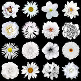Mix collage of natural and surreal white flowers 16 in 1. Peony, dahlia, primula, aster, daisy, rose, gerbera, clove, chrysanthemum, cornflower, flax Stock Photo