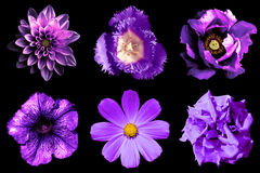 Mix collage of violet flowers 6 in 1 isolated Royalty Free Stock Photos