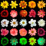 Mix collage of yellow, red, white, rose, green flowers. Mix collage of flowers: day lilies, Hemerocallis, clematis, roses, daisy, flax, decorative sunflower Stock Image