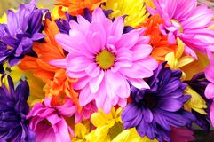 Mix colorful  flower Royalty Free Stock Image