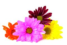 Mix of colorful flowers Royalty Free Stock Photography