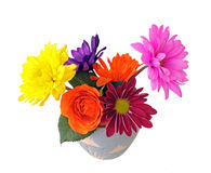 Mix colorful flowers Stock Images