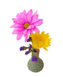 Mix colorful flowers Stock Image