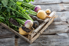 Mix of colorful organic vegetables with roots in wooden crate Stock Image