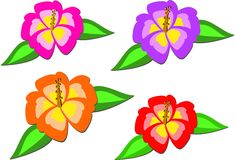Mix of Colorful Tropical Hibiscus Royalty Free Stock Photography