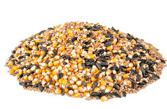 Mix corn, wheat, sunflower seeds Stock Image