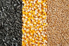 Mix corn, wheat, sunflower seeds Stock Photography