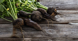 Mix of cracked organic black radishes with fresh green tops Stock Image