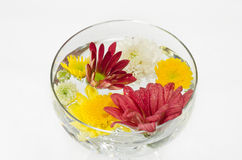 Mix cut flower in the glass Stock Photos