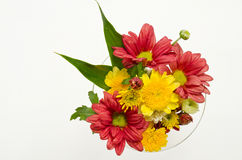 Mix cut flower in the glass Royalty Free Stock Image