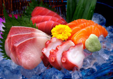 Mix delicious raw fish, Sasimi on ice Royalty Free Stock Photography
