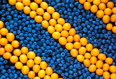 Mix of different berries: plums and blueberries. Concept of health food. vitamins of yellow and blue fruits. rustic style. Top view Stock Image