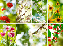 Mix of different photos of flowers in the garden closeup Royalty Free Stock Photo