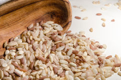 Mix of different rice types in the wooden spoon Stock Photos