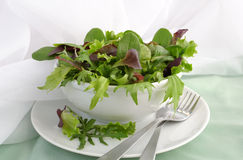 Mix of different varieties of lettuce Stock Photography