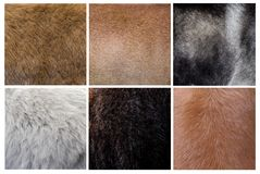 Mix Dogs Fur Texture Stock Photos