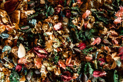 Mix of dried aromatic flowers Royalty Free Stock Image