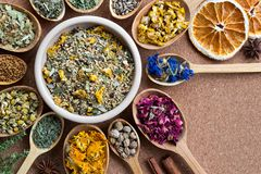 Mix of dried herbs on wooden spoons with copy space, top view. Mullein, cornflower, rose petals, nasturtium seeds, calendula, horsetail, chamomile, fenugreek royalty free stock photography