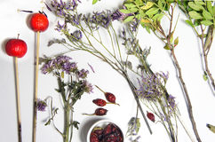 Mix of dry flowers for ikebana Stock Images