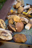 Mix of edible forest mushrooms Royalty Free Stock Photography