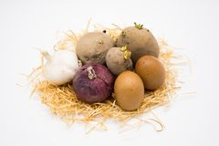 Mix of egg potato onion and garlic on the nest with white background stock photos