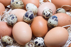 Mix eggs Stock Photography
