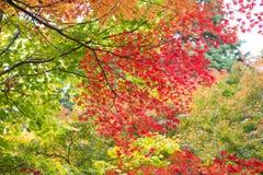 Mix färgade leaves arkivbild