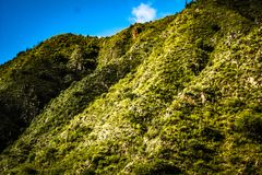 Hill in fertile valley of flora, vegetation in different shades of green. stock image