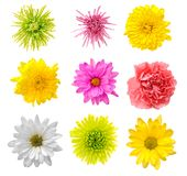 Mix flower Royalty Free Stock Photography