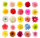 Mix flower Stock Photos