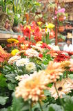 Mix flowers from cameron highland. Perfecly grows in cold and cozy condition Royalty Free Stock Image