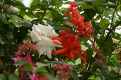Mix flowers looking dream. White red green Royalty Free Stock Image