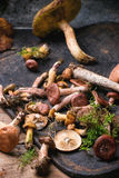 Mix of forest mushrooms Stock Images