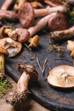 Mix of forest mushrooms Royalty Free Stock Photos