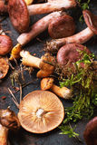 Mix of forest mushrooms Royalty Free Stock Images
