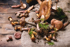 Mix of forest mushrooms Stock Photography