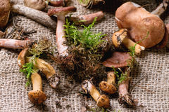 Mix of forest mushrooms Royalty Free Stock Photo