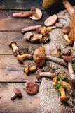 Mix of forest mushrooms Royalty Free Stock Image