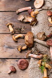 Mix of forest mushrooms Stock Image