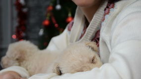 Mix of four scenes, beautiful girl with white puppies in holiday spirit surrounded by New Year`s decoration stock video footage