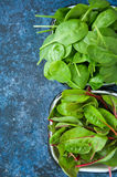 Mix of fresh baby mangold and spinach leaves Royalty Free Stock Photos