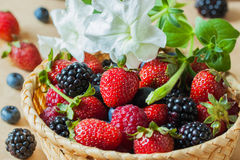 Mix of fresh berries , blueberries, strawberries, raspberries and blackberries, in wicker bowl. Decorated with flower petunia, diet and nutrition concept Stock Photos